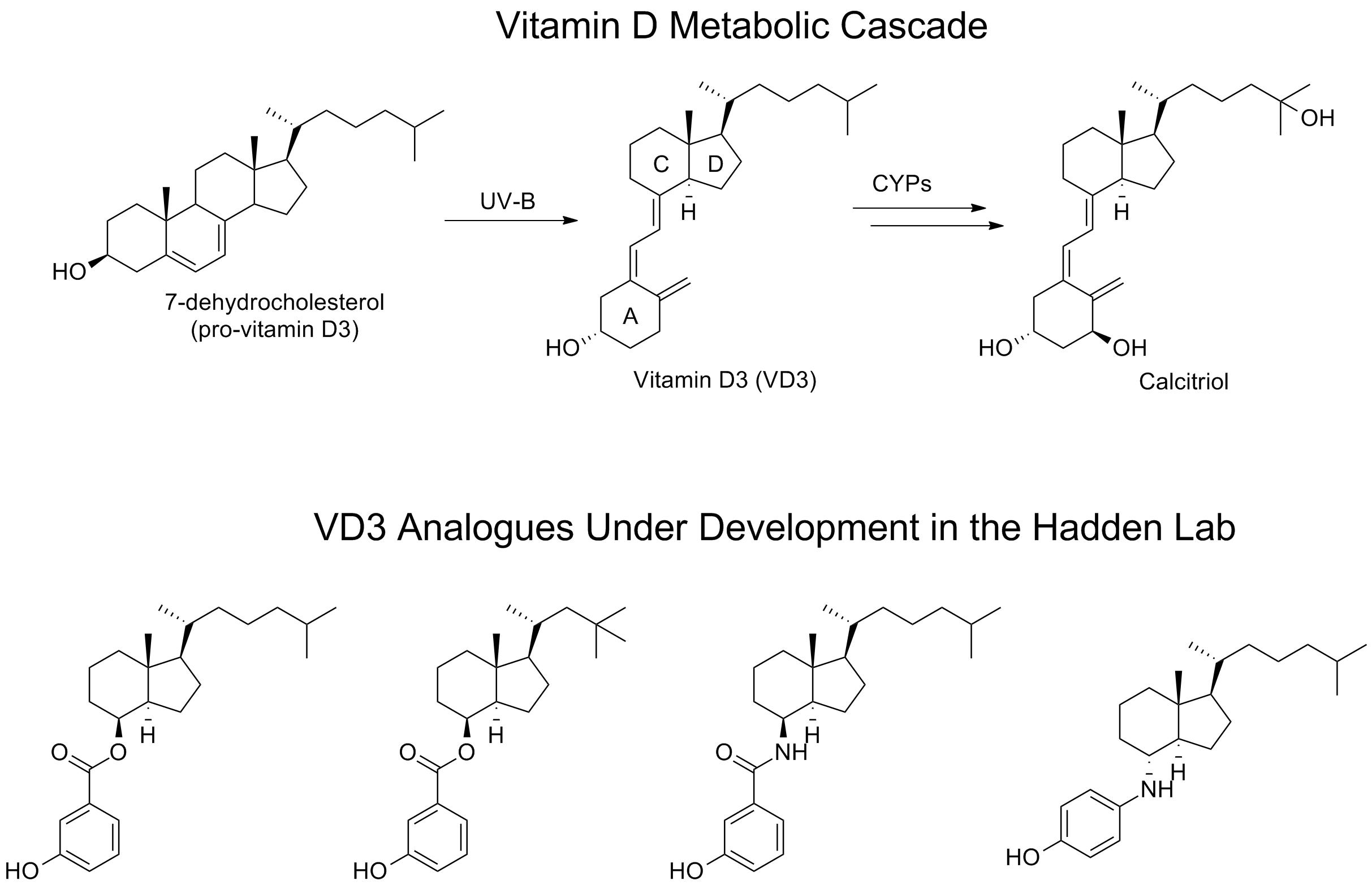 VD3 Inhibition Figure